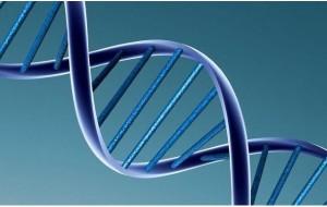 La thérapie génique rend l'audition à des souris