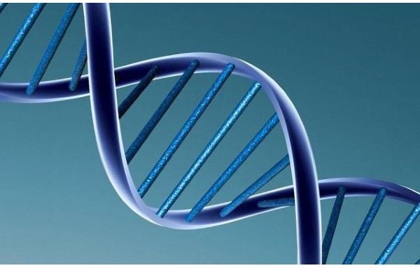 Audition surdité thérapie génique